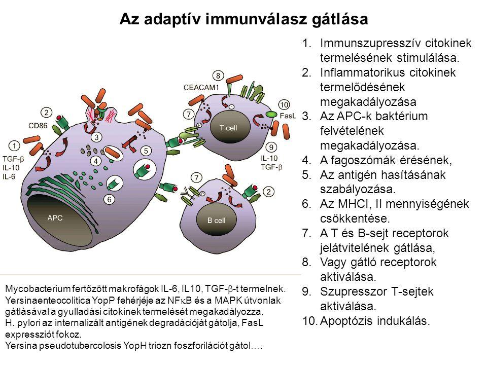 Az adaptív immunválasz gátlása 1.Immunszupresszív citokinek termelésének stimulálása. 2.Inflammatorikus citokinek termelődésének megakadályozása 3.Az