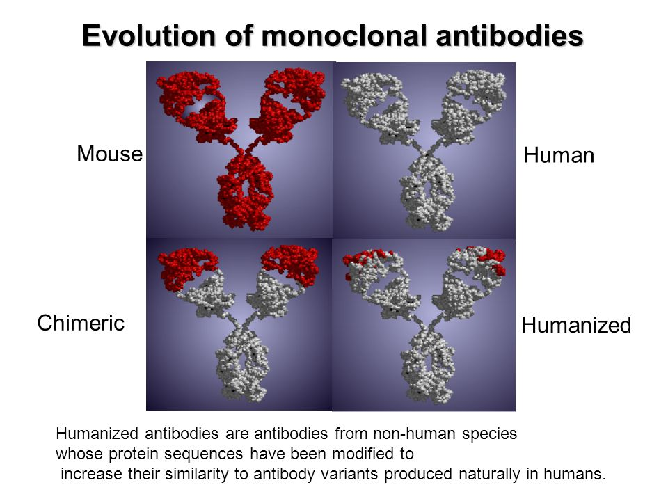 Evolution of monoclonal antibodies Mouse Chimeric Human Humanized Humanized antibodies are antibodies from non-human species whose protein sequences h