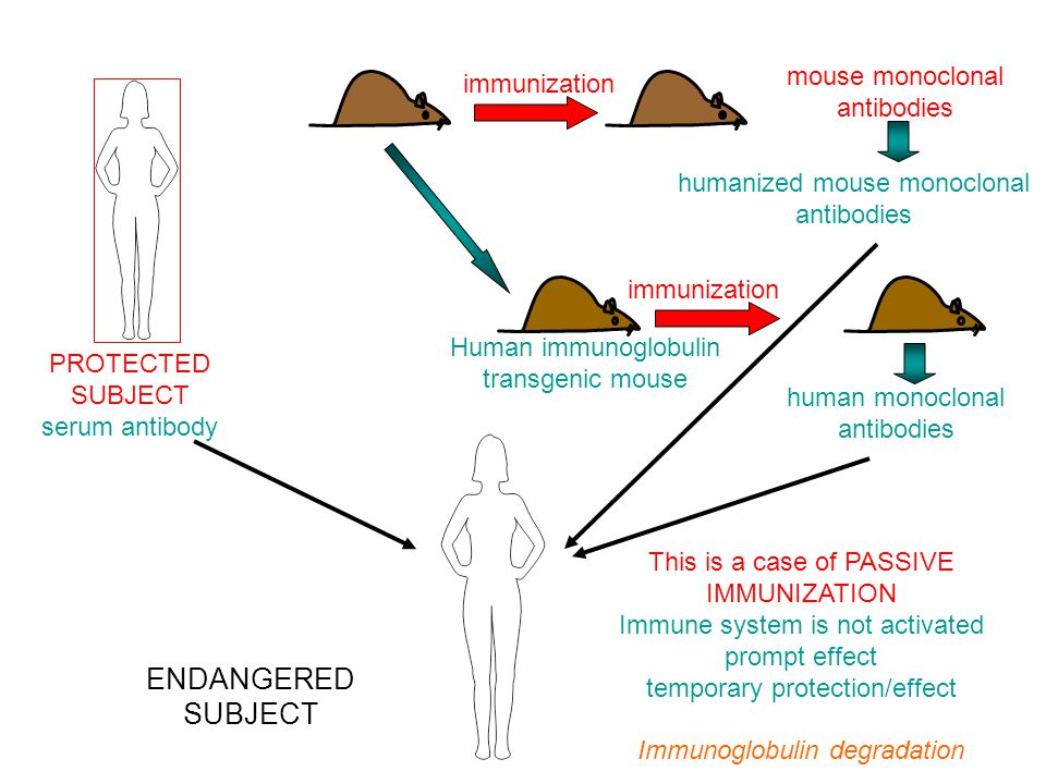 Tumor therapy - Tumor therapy Monoclonals can be used for targeted chemotherapy of tumors.