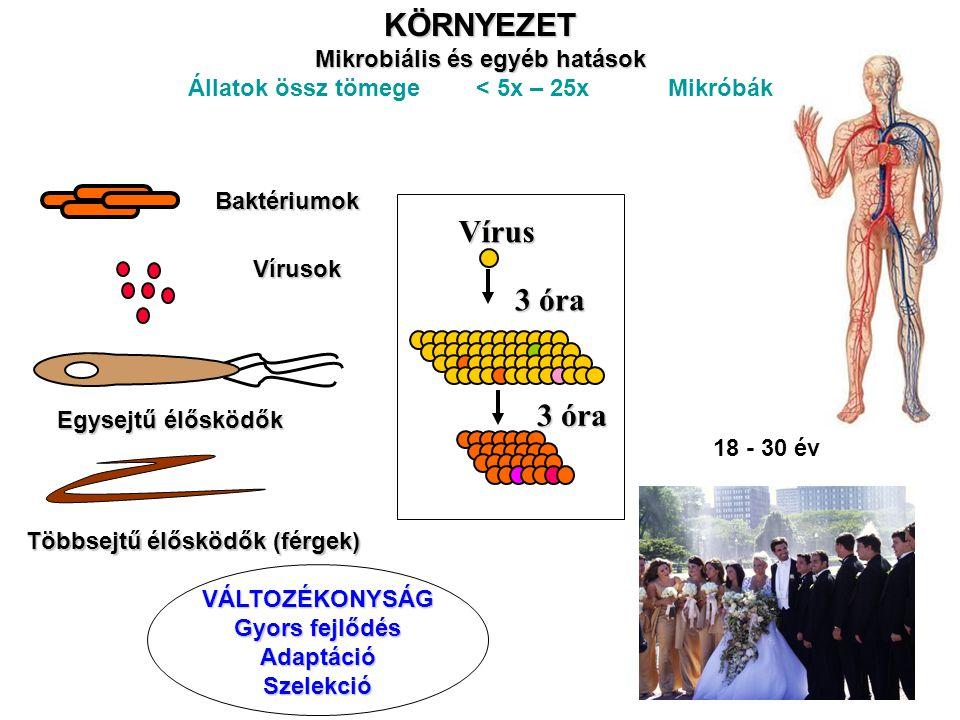 AZ EMBERI TESTBEN ÉLŐ MIKROBIÁLIS KÖRNYEZET EMBERI TEST Sejtek 90%-a mikróba 10% humán sejt 10 12 (1.5kg) baktérium a bélben Speciális mikrobiális környezet a nyálkahártya felületeken Az anyagcsere és immunitás inegrált fejlődése az evolúció során a túlélést biztosító szükséges folyamatként jött létre szükséges A szerv rendszerek és jelátviteli folyamatok párhuzamos fejlődése Drosophila zsírtest – máj, zsírszövet, nyirokcsomók Tápanyag érzékelésTápanyag érzékelés Energia felhasználás hatékonysága Energia tárolás Energia felesleg Metabolikus szindróma Patogén érzékelésPatogén érzékelés Éhezés, alultápláltság Patogének elleni védekezés Magas energia fogyasztás Csökkent immunválasz Krónikus gyulladás