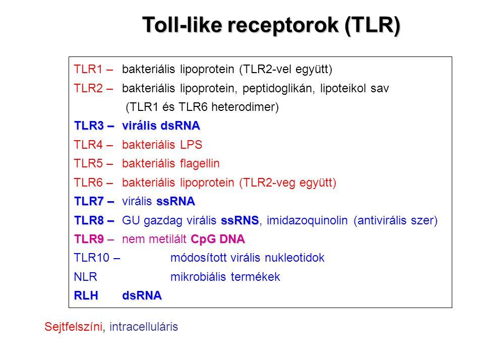 TLR1 – bakteriális lipoprotein (TLR2-vel együtt) TLR2 –bakteriális lipoprotein, peptidoglikán, lipoteikol sav (TLR1 és TLR6 heterodimer) TLR3 –virális dsRNA TLR4 – bakteriális LPS TLR5 – bakteriális flagellin TLR6 –bakteriális lipoprotein (TLR2-veg együtt) TLR7 –ssRNA TLR7 – virális ssRNA TLR8 –ssRNS TLR8 – GU gazdag virális ssRNS, imidazoquinolin (antivirális szer) TLR9CpG DNA TLR9 – nem metilált CpG DNA TLR10 – módosított virális nukleotidok NLR mikrobiális termékek RLHdsRNA Toll-like receptorok (TLR) Sejtfelszíni, intracelluláris