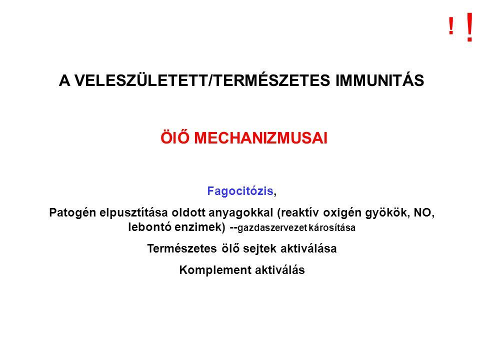 A VELESZÜLETETT/TERMÉSZETES IMMUNITÁS ÖlŐ MECHANIZMUSAI Fagocitózis, Patogén elpusztítása oldott anyagokkal (reaktív oxigén gyökök, NO, lebontó enzimek) -- gazdaszervezet károsítása Természetes ölő sejtek aktiválása Komplement aktiválás .