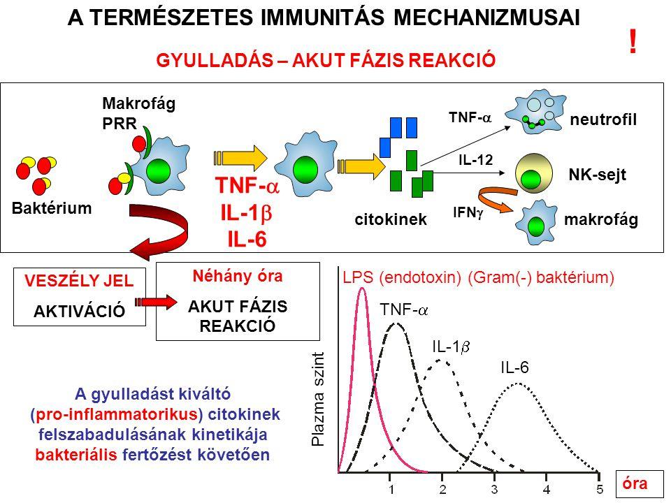 NK-sejt IL-12 makrofág IFN  citokinek neutrofil TNF-  GYULLADÁS – AKUT FÁZIS REAKCIÓ A TERMÉSZETES IMMUNITÁS MECHANIZMUSAI óra Plazma szint LPS (endotoxin) (Gram(-) baktérium) TNF-  IL-1  IL-6 A gyulladást kiváltó (pro-inflammatorikus) citokinek felszabadulásának kinetikája bakteriális fertőzést követően TNF-  IL-1  IL-6 Néhány óra AKUT FÁZIS REAKCIÓ Baktérium VESZÉLY JEL AKTIVÁCIÓ Makrofág PRR !