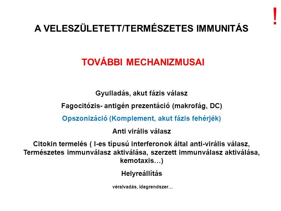 A VELESZÜLETETT/TERMÉSZETES IMMUNITÁS TOVÁBBI MECHANIZMUSAI Gyulladás, akut fázis válasz Fagocitózis- antigén prezentáció (makrofág, DC) Opszonizáció (Komplement, akut fázis fehérjék) Anti virális válasz Citokin termelés ( I-es típusú interferonok által anti-virális válasz, Természetes immunválasz aktiválása, szerzett immunválasz aktiválása, kemotaxis…) Helyreállítás véralvadás, idegrendszer… !