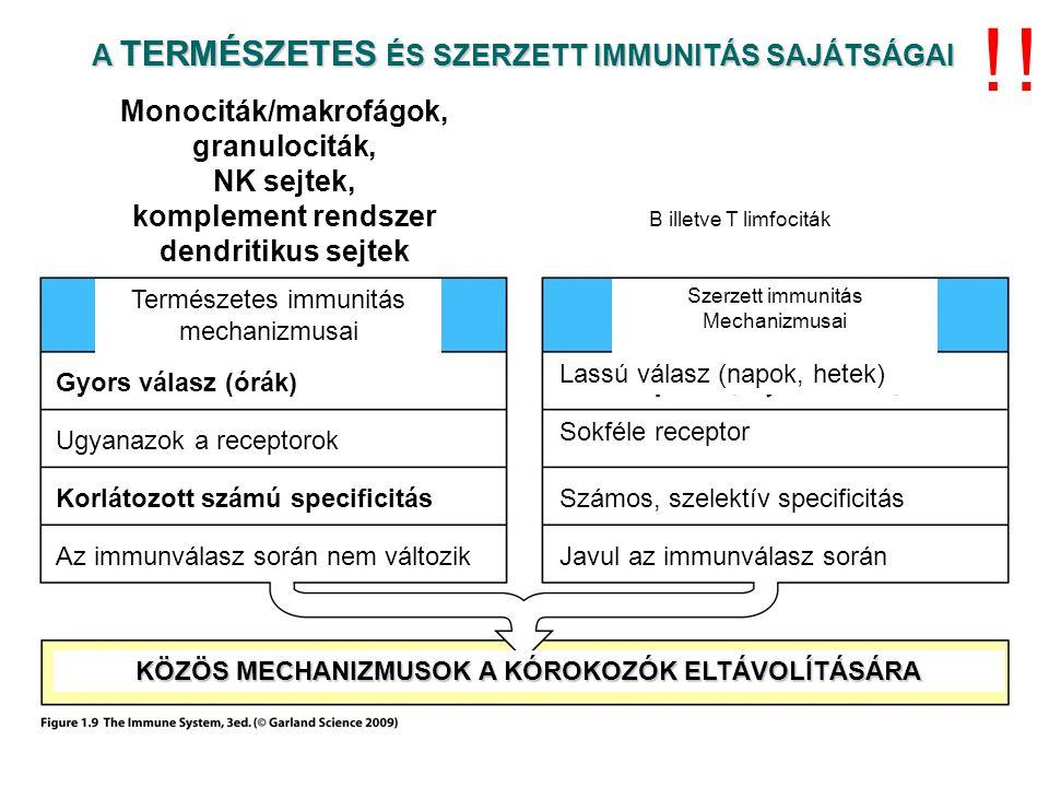A TOLL SZERŰ RECEPTOROK KÜLÖNBÖZŐ MIKROBIÁLIS STRUKTÚRÁKAT ISMERNEK FEL TLR receptorok: Intracelluláris és sejtfelszíni szenzorok.
