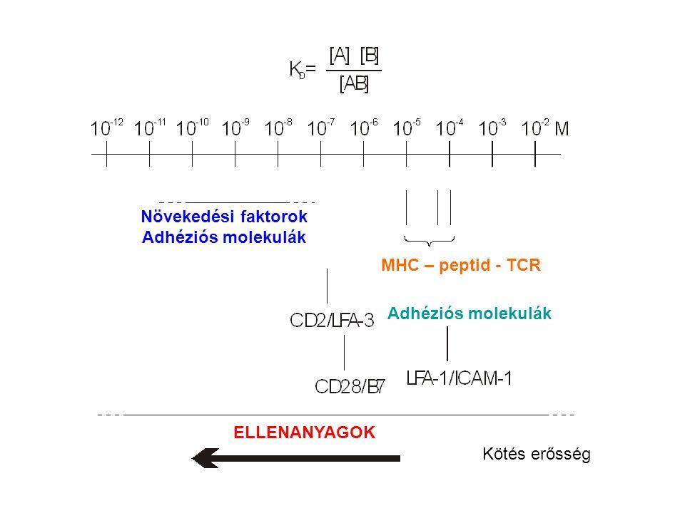 Kötés erősség ELLENANYAGOK Növekedési faktorok Adhéziós molekulák MHC – peptid - TCR Adhéziós molekulák