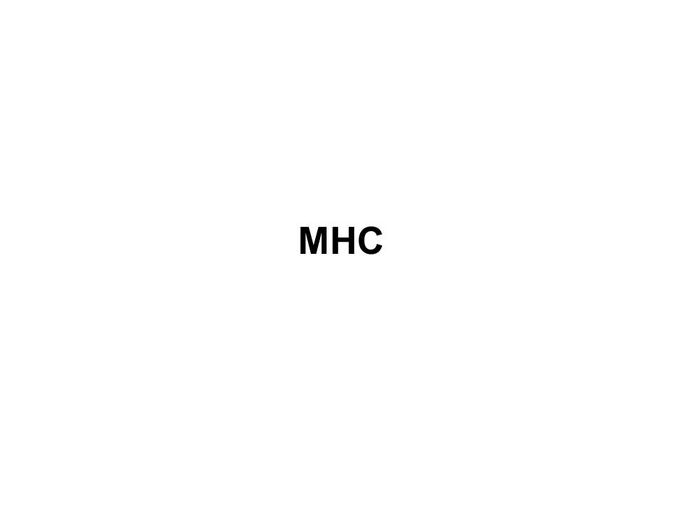 A valóságban az MHC allélek NEM véletlenszerűen oszlanak el a populációban Az allélek a fajták és a vonalak között haplotípusokban szegregálódnak 15.18 28.65 13.38 4.46 0.02 5.72 18.88 8.44 9.92 1.88 4.48 24.63 2.64 1.76 0.01 CAU AFR ASI Frekvencia (%) HLA-A1 HLA- A2 HLA- A3 HLA- A28 HLA- A36 Allél csoportok
