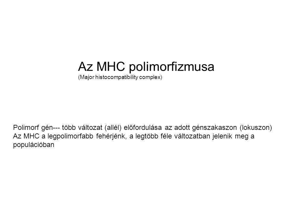 Az MHC polimorfizmusa (Major histocompatibility complex) Polimorf gén--- több változat (allél) előfordulása az adott génszakaszon (lokuszon) Az MHC a