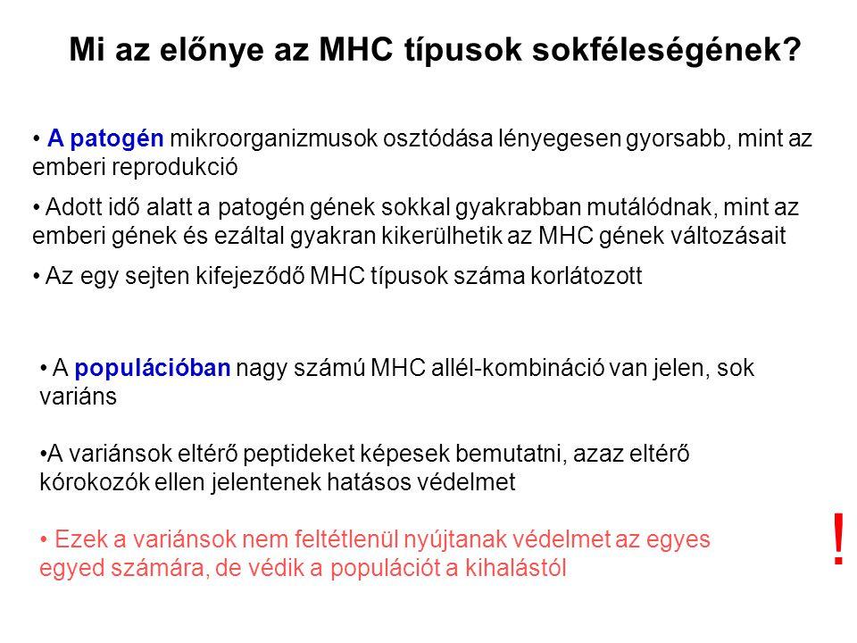 Mi az előnye az MHC típusok sokféleségének.