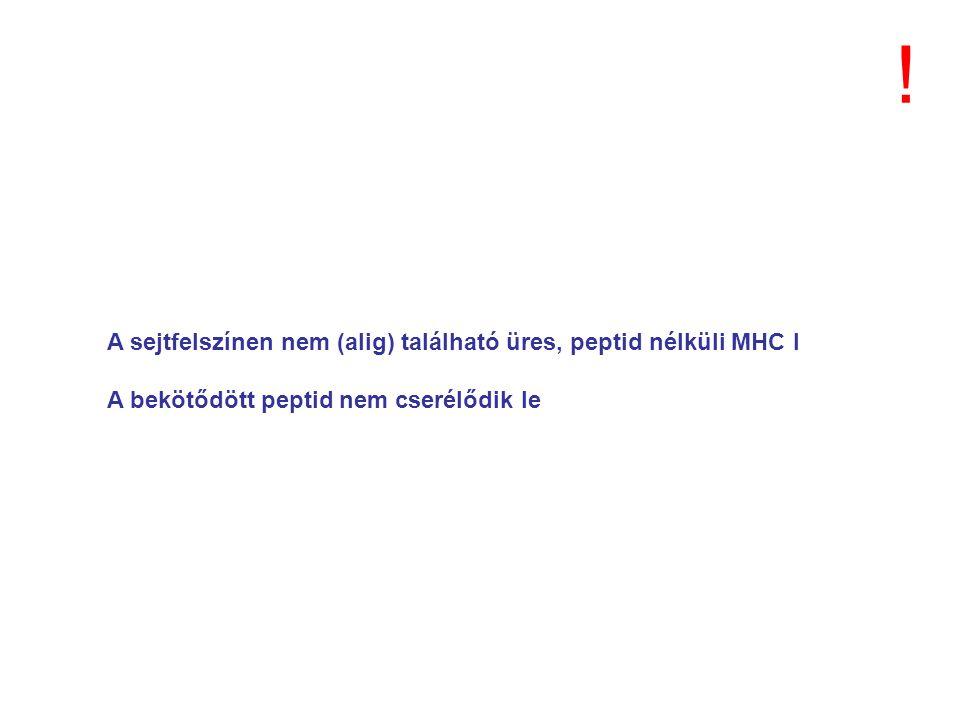 A sejtfelszínen nem (alig) található üres, peptid nélküli MHC I A bekötődött peptid nem cserélődik le !