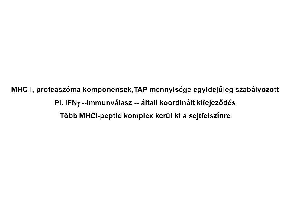 MHC-I, proteaszóma komponensek,TAP mennyisége egyidejűleg szabályozott Pl. IFN  --immunválasz -- általi koordinált kifejeződés Több MHCI-peptid kompl
