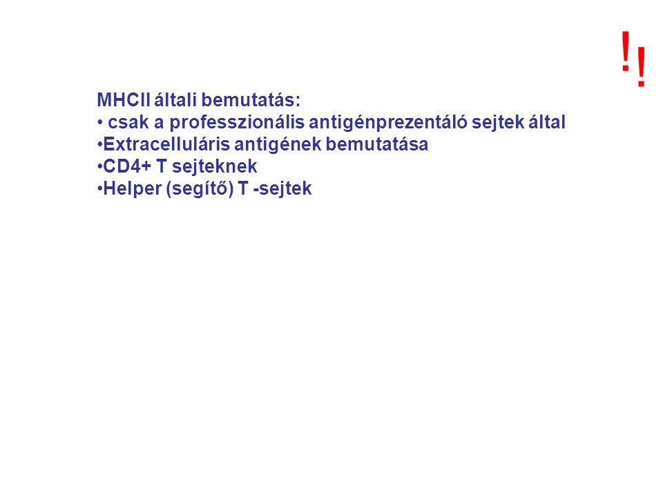 MHCII általi bemutatás: csak a professzionális antigénprezentáló sejtek által Extracelluláris antigének bemutatása CD4+ T sejteknek Helper (segítő) T