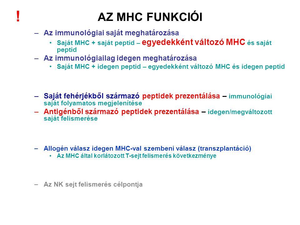 AZ MHC FUNKCIÓI –Az immunológiai saját meghatározása Saját MHC + saját peptid – egyedekként változó MHC és saját peptid –Az immunológiailag idegen meg