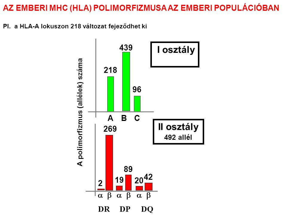 A FERTŐZÉSEK KIMENETELE EGY ÉS TÖBB POLIMORF MHC GÉN ESETÉN v Példa: Ha csak egyféle MHC molekula (MHC X) lenne a populációban A populációt a kihalás fenyegetné A patogén kikerüli az MHC X általi felismerést MHC XX Többféle MHC-Gén v v v v v v v v v v v v vvv v v v v v v v v v A populáció védett V – vírus fertőzés által okozott kár