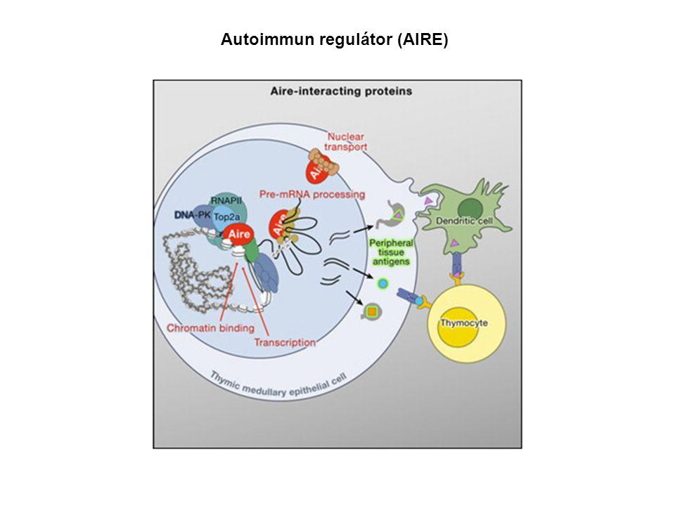 Autoimmun regulátor (AIRE)