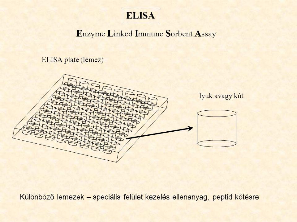 ELISA ELISA plate (lemez) E nzyme L inked I mmune S orbent A ssay lyuk avagy kút Különböző lemezek – speciális felület kezelés ellenanyag, peptid köté