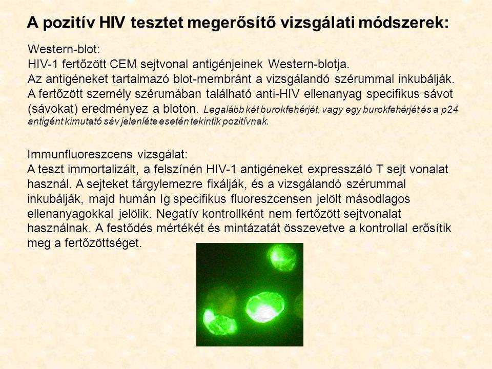 A pozitív HIV tesztet megerősítő vizsgálati módszerek: Western-blot: HIV-1 fertőzött CEM sejtvonal antigénjeinek Western-blotja. Az antigéneket tartal