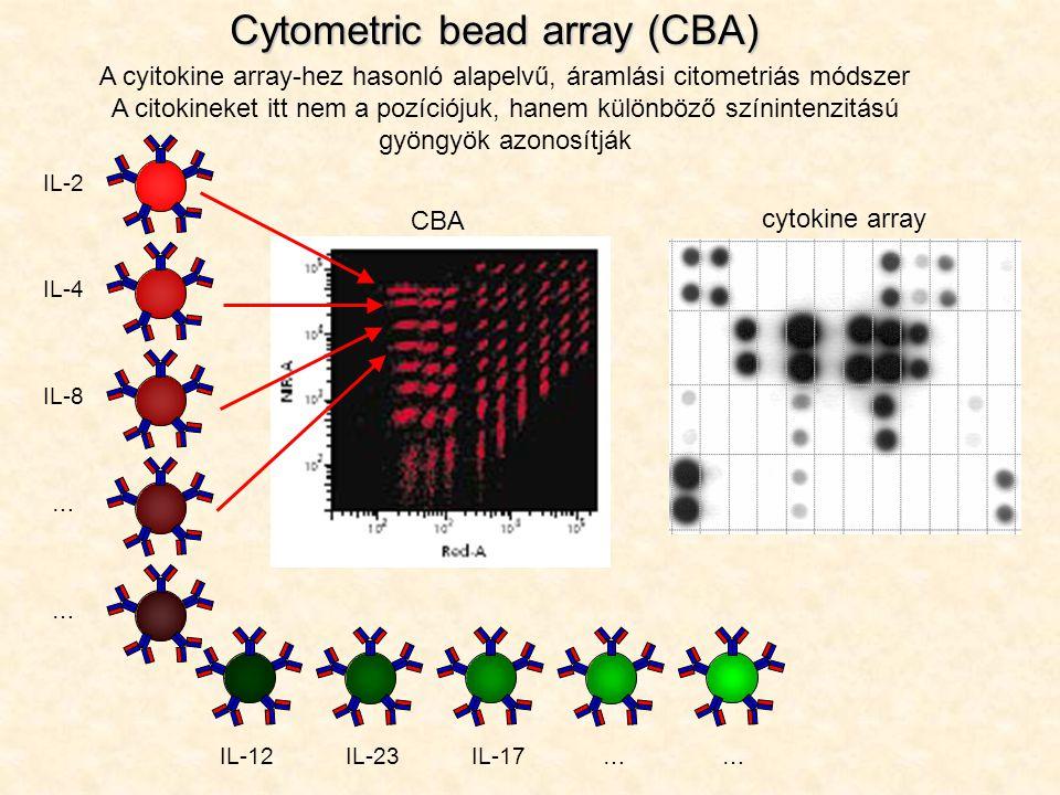 Cytometric bead array (CBA) A cyitokine array-hez hasonló alapelvű, áramlási citometriás módszer A citokineket itt nem a pozíciójuk, hanem különböző s