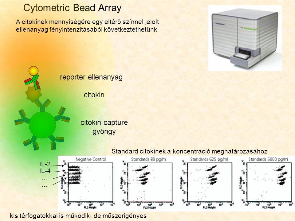 Cytometric Bead Array A citokinek mennyiségére egy eltérő színnel jelölt ellenanyag fényintenzitásából következtethetünk IL-2 IL-4 … … Standard citoki
