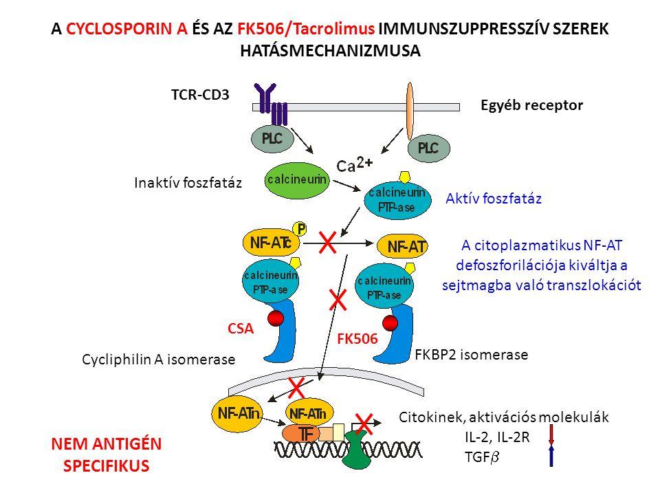 FK506 CSA Citokinek, aktivációs molekulák IL-2, IL-2R TGF  Cycliphilin A isomerase FKBP2 isomerase Inaktív foszfatáz Aktív foszfatáz A citoplazmatiku