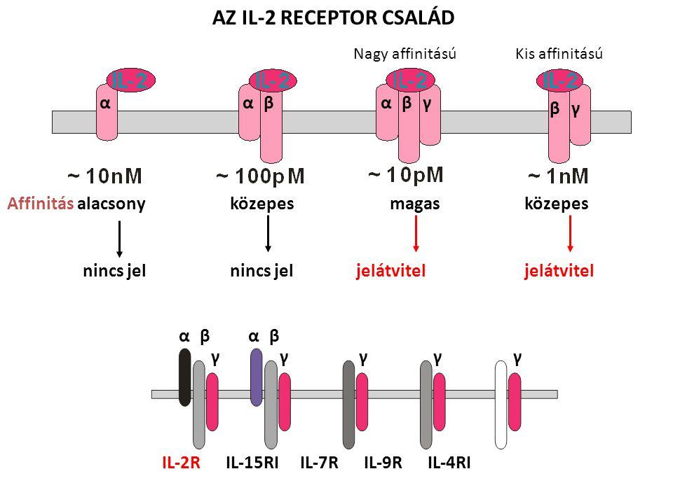 Affinitás alacsony közepes magas közepes nincs jel nincs jel jelátvitel jelátvitel ααβαβγ βγ αβ γ αβ γγγγ AZ IL-2 RECEPTOR CSALÁD IL-2R IL-15RI IL-7R