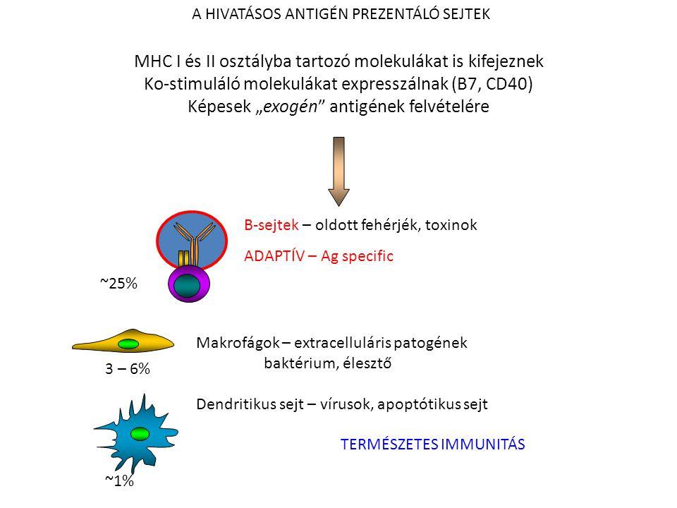 """PROFESSIONAL ANTIGEN PRESENTING CELLS 3 – 6% ~1% ~25% A HIVATÁSOS ANTIGÉN PREZENTÁLÓ SEJTEK MHC I és II osztályba tartozó molekulákat is kifejeznek Ko-stimuláló molekulákat expresszálnak (B7, CD40) Képesek """"exogén antigének felvételére B-sejtek – oldott fehérjék, toxinok ADAPTÍV – Ag specific Makrofágok – extracelluláris patogének baktérium, élesztő Dendritikus sejt – vírusok, apoptótikus sejt TERMÉSZETES IMMUNITÁS"""