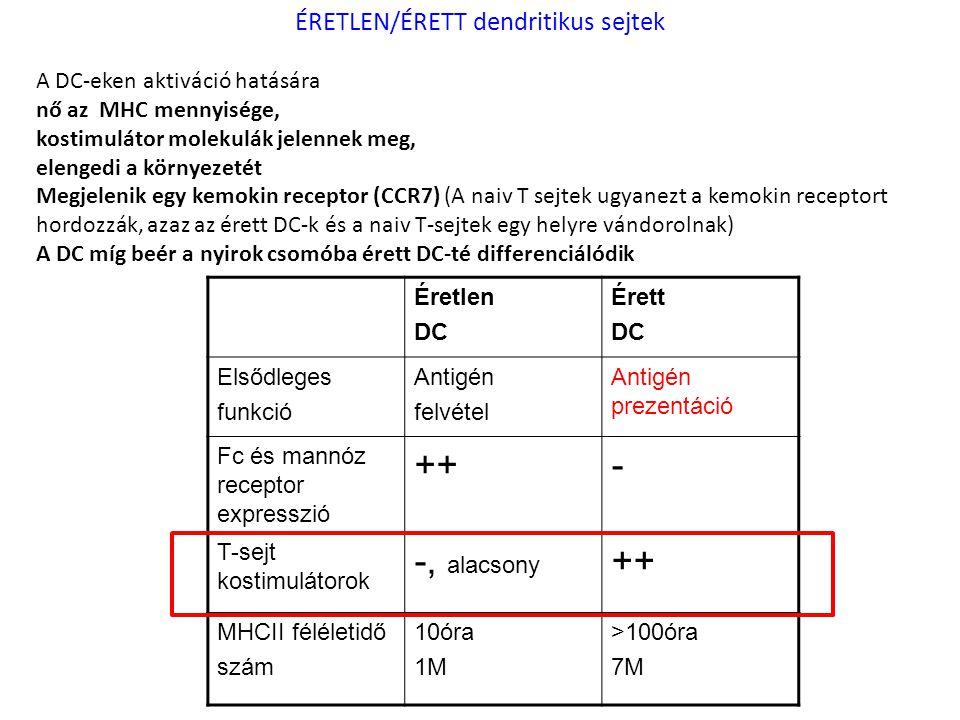 Éretlen DC Érett DC Elsődleges funkció Antigén felvétel Antigén prezentáció Fc és mannóz receptor expresszió ++- T-sejt kostimulátorok -, alacsony ++