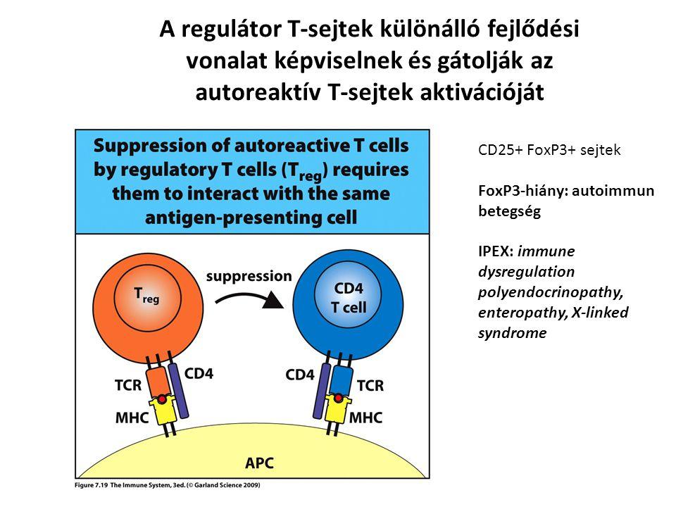 A regulátor T-sejtek különálló fejlődési vonalat képviselnek és gátolják az autoreaktív T-sejtek aktivációját CD25+ FoxP3+ sejtek FoxP3-hiány: autoimm