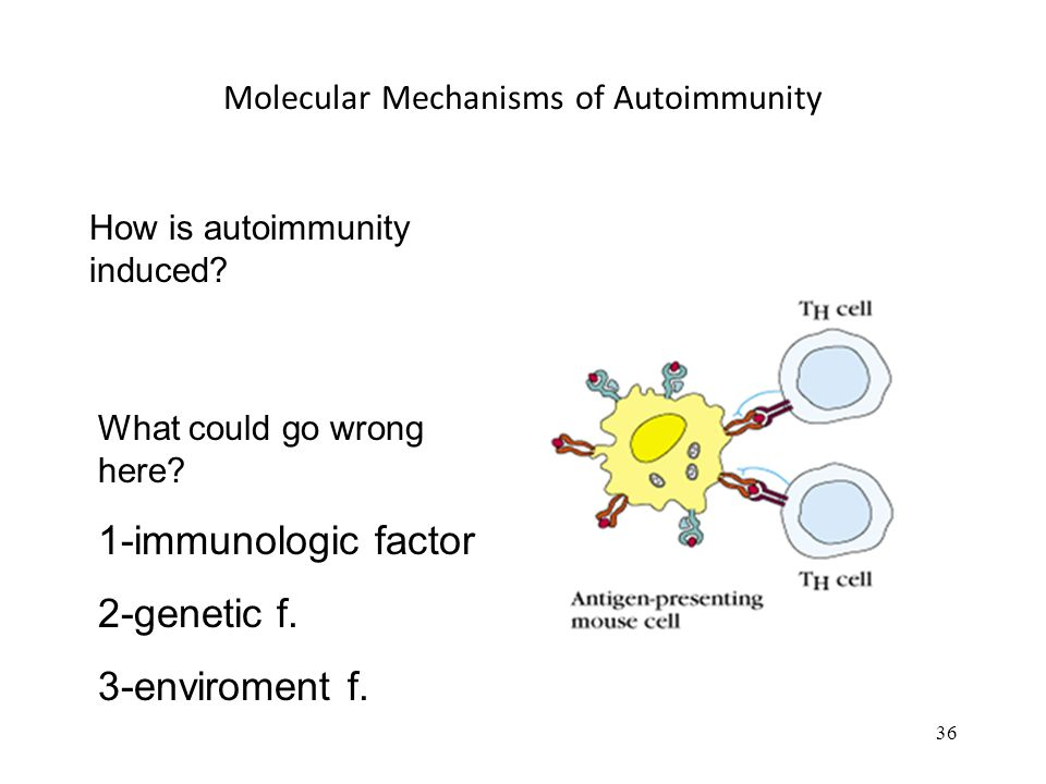 36 Molecular Mechanisms of Autoimmunity What could go wrong here? 1-immunologic factor 2-genetic f. 3-enviroment f. How is autoimmunity induced?