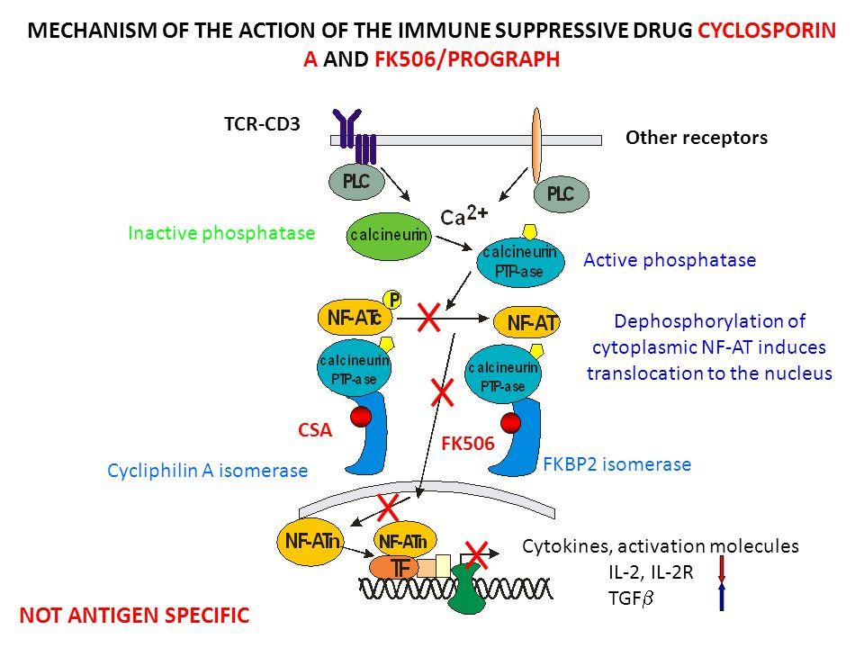 FK506 CSA Cytokines, activation molecules IL-2, IL-2R TGF  Cycliphilin A isomerase FKBP2 isomerase Inactive phosphatase Active phosphatase Dephosphor