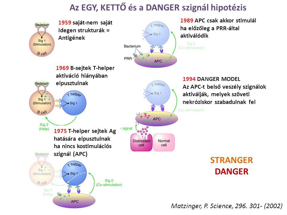 Az EGY, KETTŐ és a DANGER szignál hipotézis 1959 saját-nem saját Idegen strukturák = Antigének 1969 B-sejtek T-helper aktiváció hiányában elpusztulnak