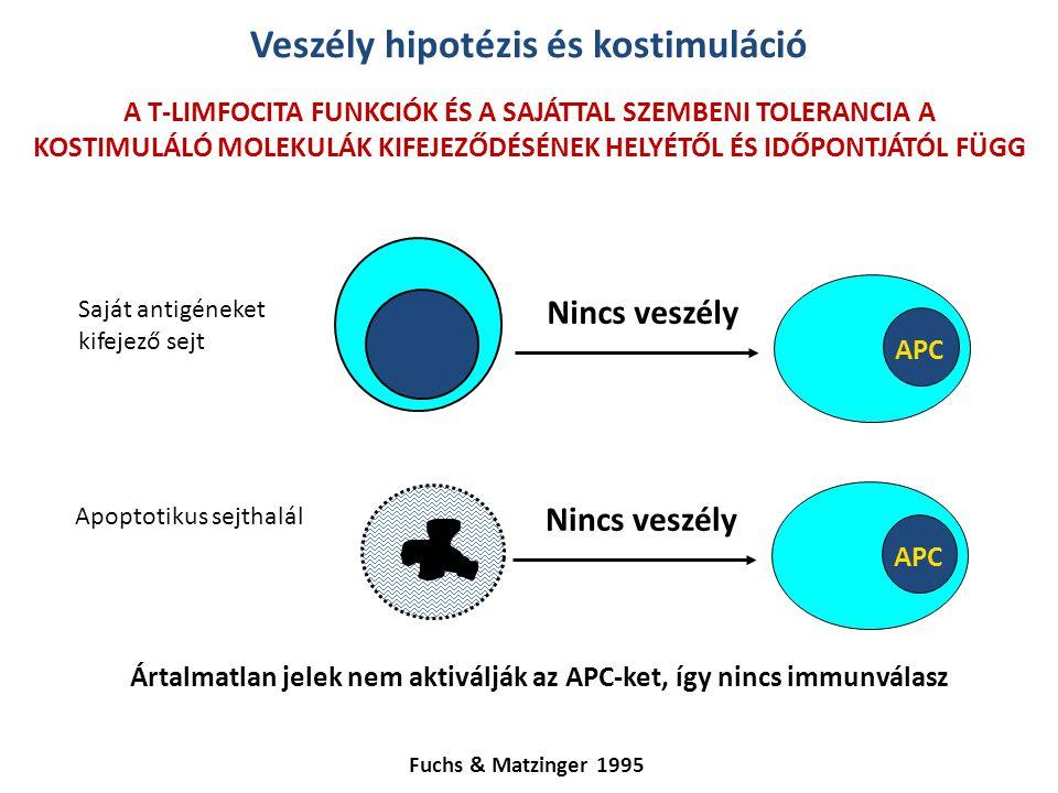 Veszély hipotézis és kostimuláció Fuchs & Matzinger 1995 A T-LIMFOCITA FUNKCIÓK ÉS A SAJÁTTAL SZEMBENI TOLERANCIA A KOSTIMULÁLÓ MOLEKULÁK KIFEJEZŐDÉSÉ