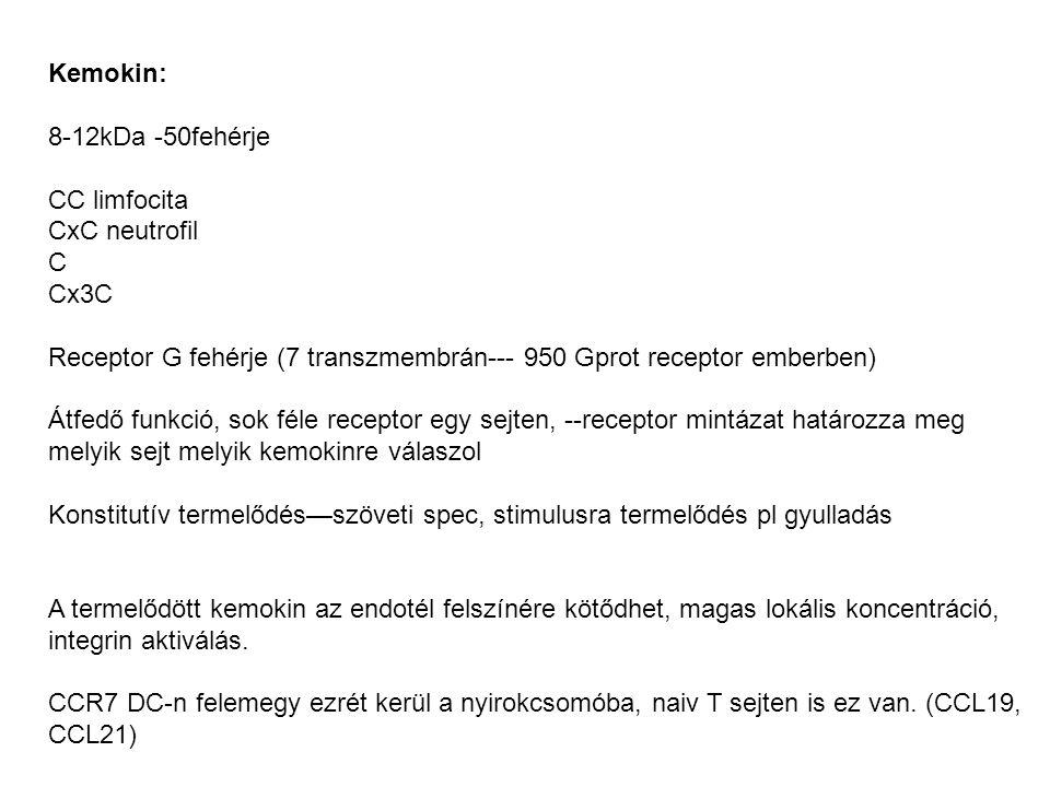 Kemokin: 8-12kDa -50fehérje CC limfocita CxC neutrofil C Cx3C Receptor G fehérje (7 transzmembrán--- 950 Gprot receptor emberben) Átfedő funkció, sok féle receptor egy sejten, --receptor mintázat határozza meg melyik sejt melyik kemokinre válaszol Konstitutív termelődés—szöveti spec, stimulusra termelődés pl gyulladás A termelődött kemokin az endotél felszínére kötődhet, magas lokális koncentráció, integrin aktiválás.
