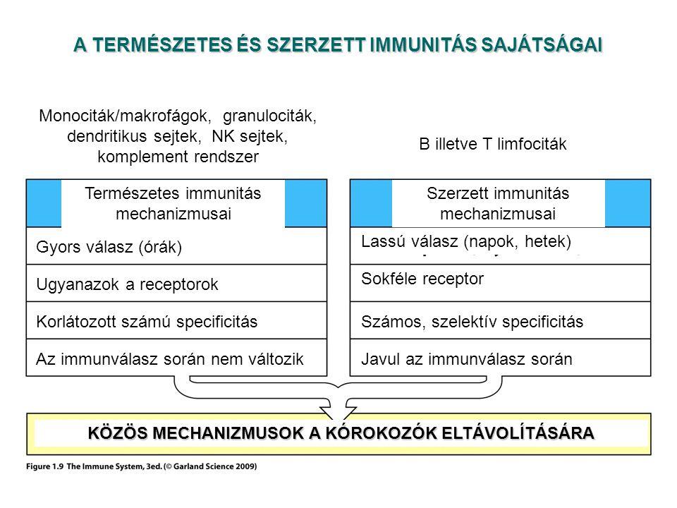 A TERMÉSZETES ÉS SZERZETT IMMUNITÁS SAJÁTSÁGAI Természetes immunitás mechanizmusai Szerzett immunitás mechanizmusai Gyors válasz (órák) Lassú válasz (