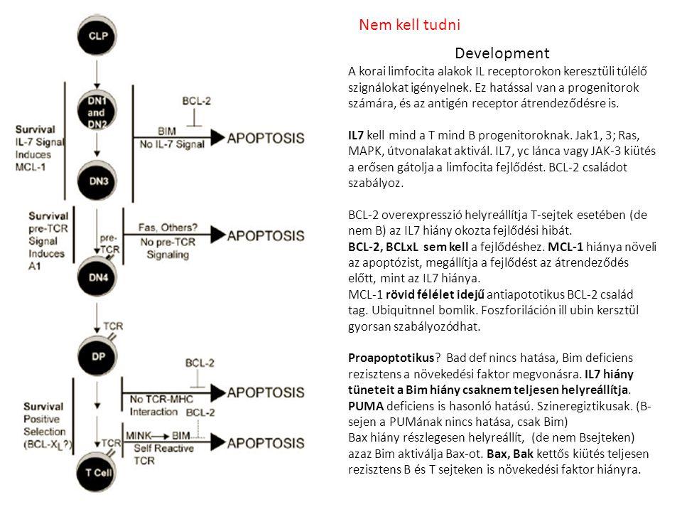 Development A korai limfocita alakok IL receptorokon keresztüli túlélő szignálokat igényelnek. Ez hatással van a progenitorok számára, és az antigén r