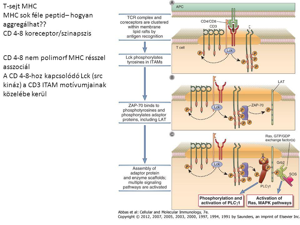 T-sejt MHC MHC sok féle peptid– hogyan aggregálhat?.