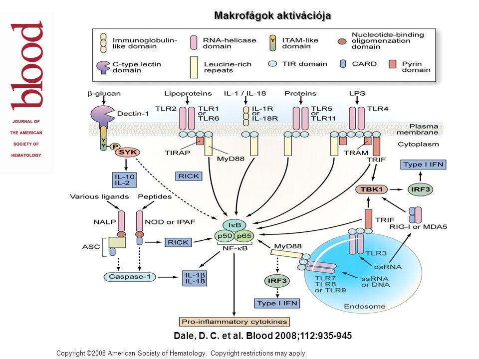 RECEPTORLIGANDFUNKCIÓ FcR IgG, IgE Opszonizált fagocitózis, ADCC, gyulladásos mediátorok termelése CR3 iC3B, ICAM-1 Opszonizált fagocitózis, M aktiváció Makrofág Mannóz Receptor Lectin Endocitózis, fagocitózis, antigén kötés, transzport SR-A LPS, polianionok, lipoteikolsav Endocitózis, fagocitózis CD14LPS LPS kötés CCR1 MIP1a, MCP-3 Monociták vándorlása CCR3EotaxinMigráció CCR5MIP1 Migráció, HIV-1 koreceptor CXCR4SDF-1a A MAKROFÁGOK RECEPTORAI, SEJTFELSZÍNI MOLEKULÁI