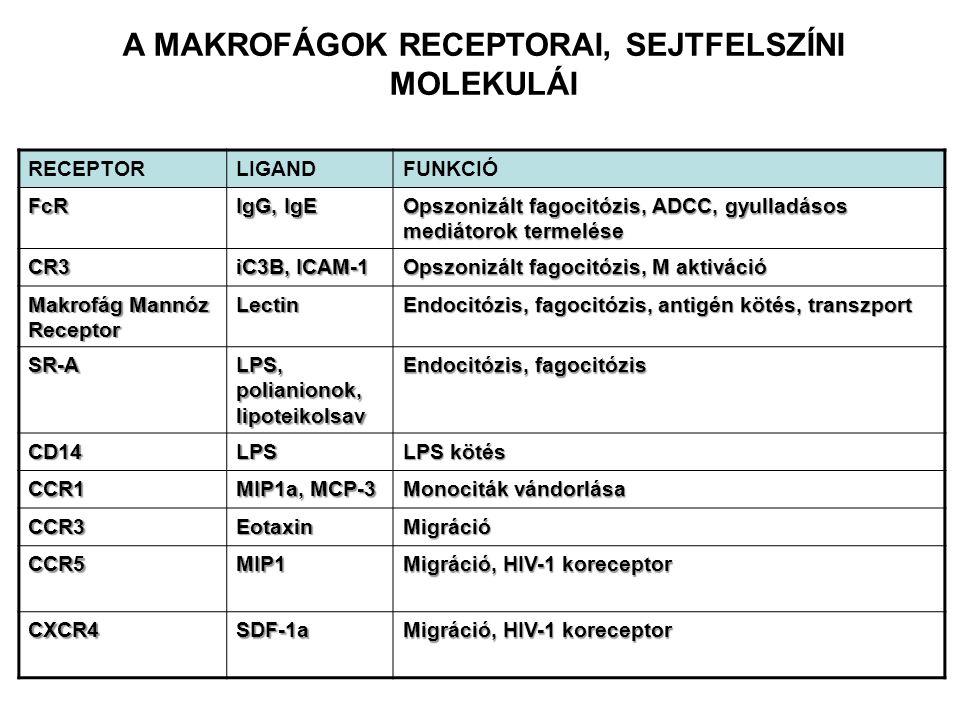 RECEPTORLIGANDFUNKCIÓ FcR IgG, IgE Opszonizált fagocitózis, ADCC, gyulladásos mediátorok termelése CR3 iC3B, ICAM-1 Opszonizált fagocitózis, M aktivác