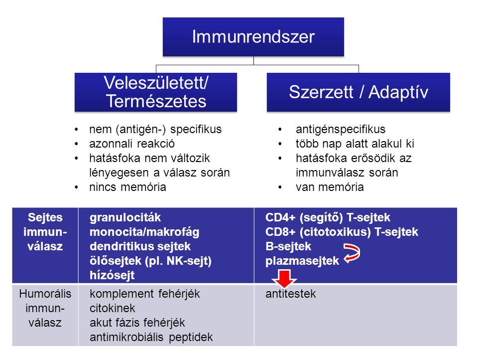 nem (antigén-) specifikus azonnali reakció hatásfoka nem változik lényegesen a válasz során nincs memória antigénspecifikus több nap alatt alakul ki hatásfoka erősödik az immunválasz során van memória Immunrendszer Veleszületett/ Természetes Szerzett / Adaptív Sejtes immun- válasz granulociták monocita/makrofág dendritikus sejtek ölősejtek (pl.