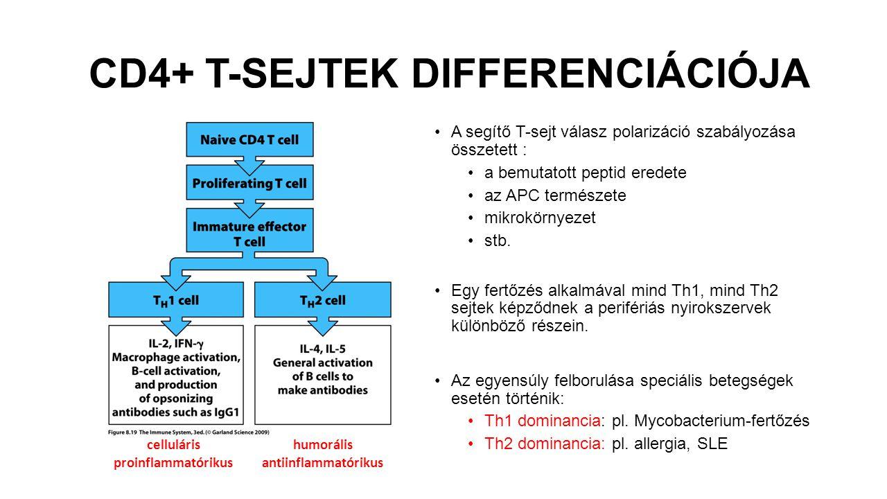 CD4+ T-SEJTEK DIFFERENCIÁCIÓJA A segítő T-sejt válasz polarizáció szabályozása összetett : a bemutatott peptid eredete az APC természete mikrokörnyezet stb.