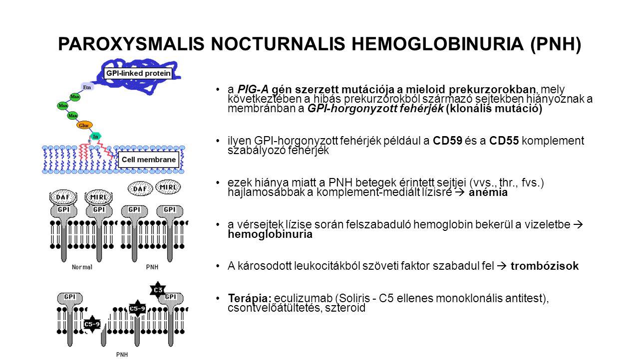 a PIG-A gén szerzett mutációja a mieloid prekurzorokban, mely következtében a hibás prekurzorokból származó sejtekben hiányoznak a membránban a GPI-ho