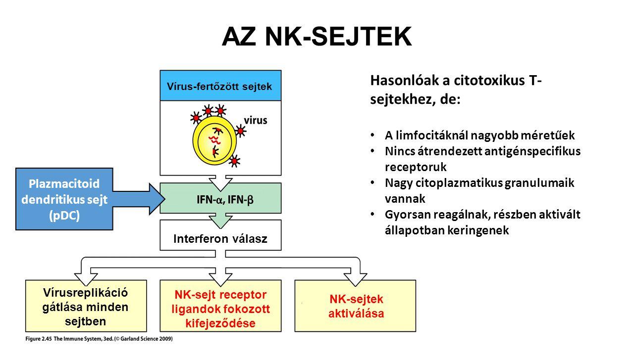 Plazmacitoid dendritikus sejt (pDC) Vírus-fertőzött sejtek Interferon válasz Vírusreplikáció gátlása minden sejtben NK-sejt receptor ligandok fokozott