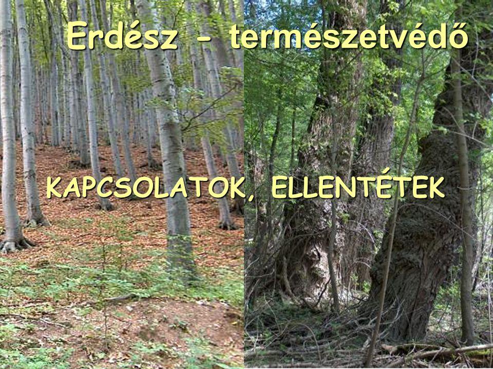 KAPCSOLATOK, ELLENTÉTEK Erdész - természetvédő Erdész - természetvédő