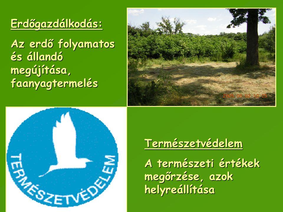 Természetvédelem A természeti értékek megőrzése, azok helyreállítása Erdőgazdálkodás: Az erdő folyamatos és állandó megújítása, faanyagtermelés