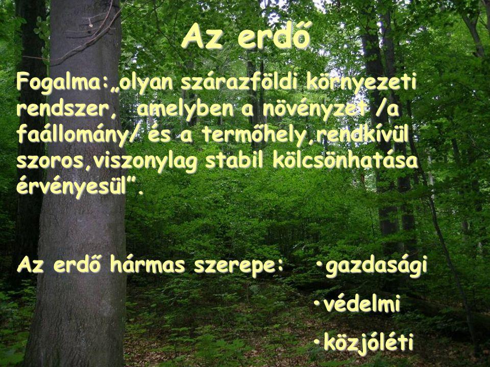 """Az erdő Fogalma:""""olyan szárazföldi környezeti rendszer, amelyben a növényzet /a faállomány/ és a termőhely,rendkívül szoros,viszonylag stabil kölcsönh"""