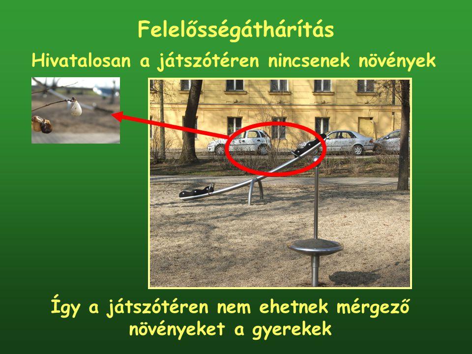 Felelősségáthárítás Hivatalosan a játszótéren nincsenek növények Így a játszótéren nem ehetnek mérgező növényeket a gyerekek