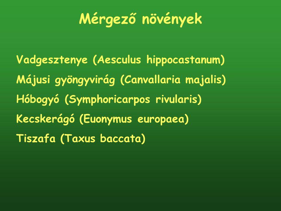 Mérgező növények Vadgesztenye (Aesculus hippocastanum) Májusi gyöngyvirág (Canvallaria majalis) Hóbogyó (Symphoricarpos rivularis) Kecskerágó (Euonymu