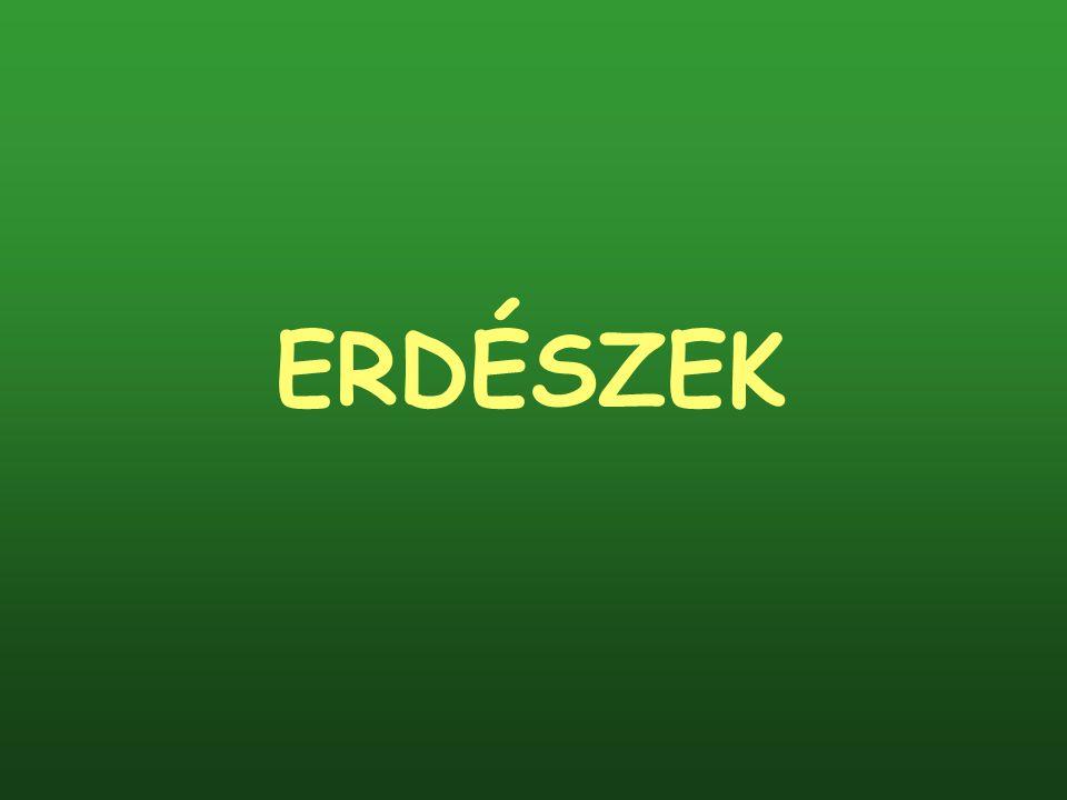 ERDÉSZEK