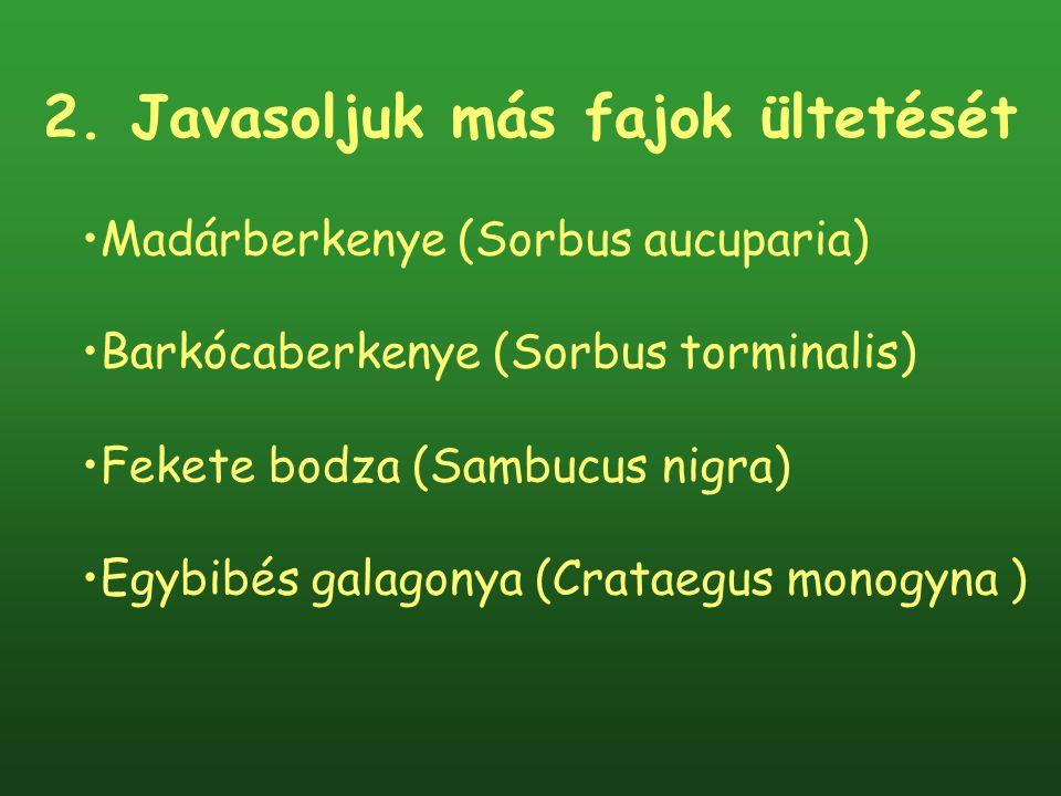 2. Javasoljuk más fajok ültetését Madárberkenye (Sorbus aucuparia) Barkócaberkenye (Sorbus torminalis) Fekete bodza (Sambucus nigra) Egybibés galagony