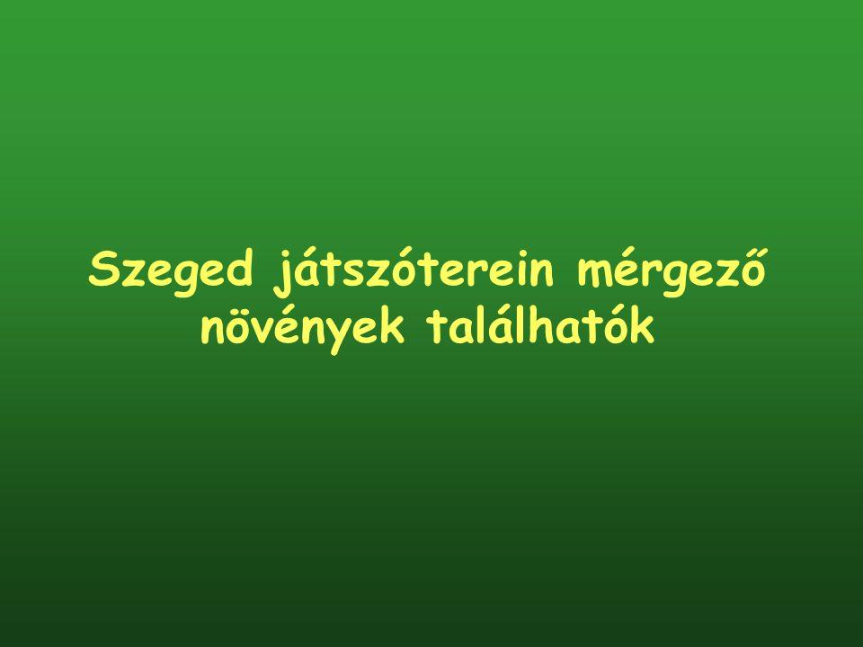 Szeged játszóterein mérgező növények találhatók